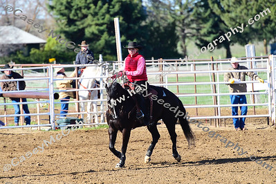 Rein Cow Horse