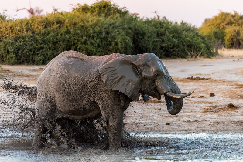 Botswana_June_2017 (4254 of 6179).jpg