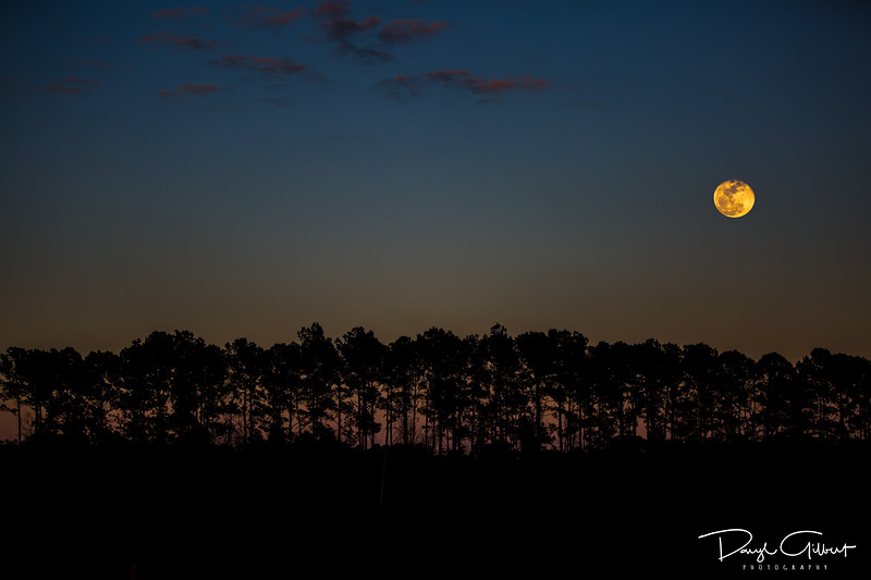 Wolf Moon Over Tally