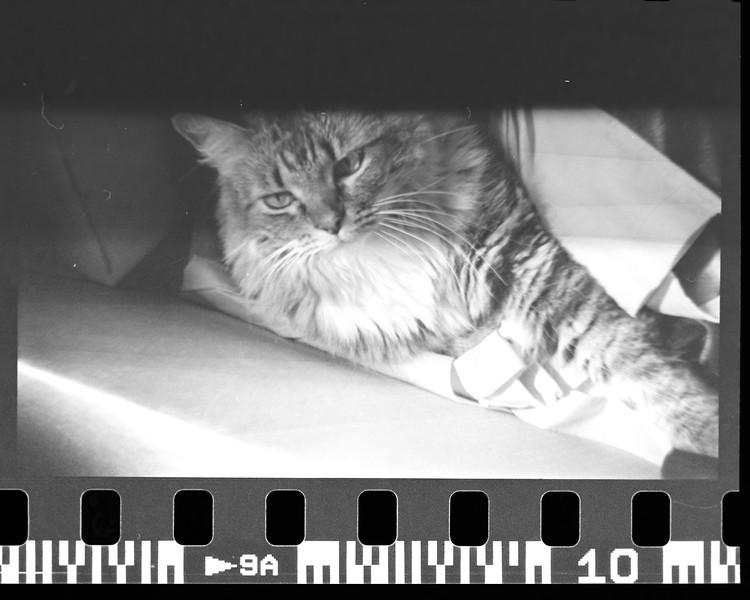 mark film scan-017.jpg