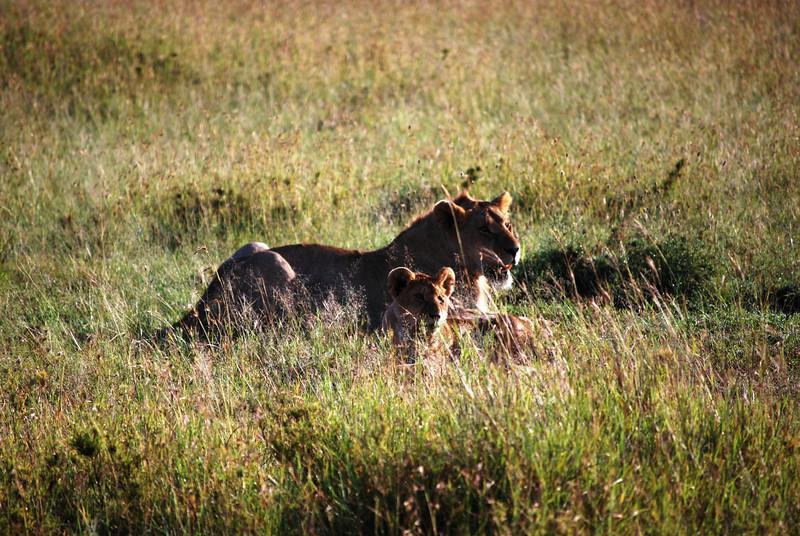 Serengeti (115).JPG