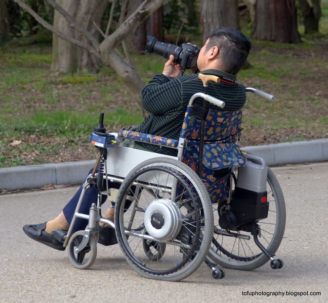 A man in a wheelchair taking photos at the botanical gardens in Kyoto, Japan in March 2015