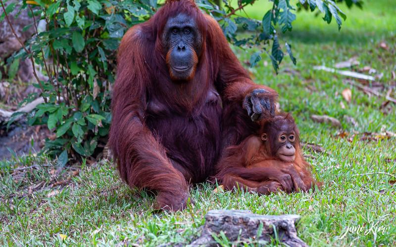 2012.10.07_Borneo_DSC_7552-Juno Kim.jpg