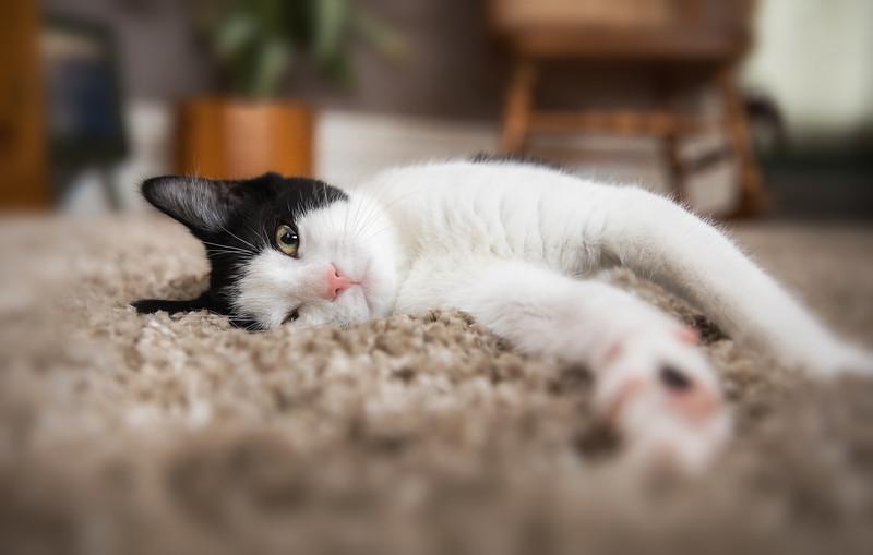 Kitten-81-Edit.jpg