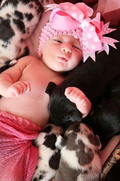 PEP-Feb7-Puppies-8530.jpg