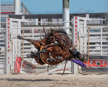 Homestead Rodeo 2019