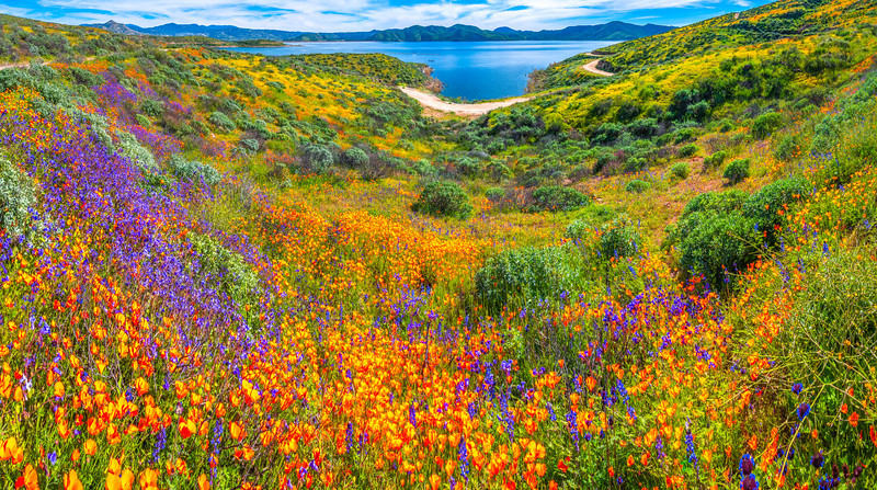 California Spring Wildflower Superbloom Symphony #14: Diamond Valley Lake Wildflower Trail Superbloom!   California Poppy Wild Flower Super Bloom Fine Art Landscape Nature Photography!  Elliot McGucken Fine Art Prints & Luxury Wall Art