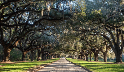 Theme for May 2019 - Live oak trees