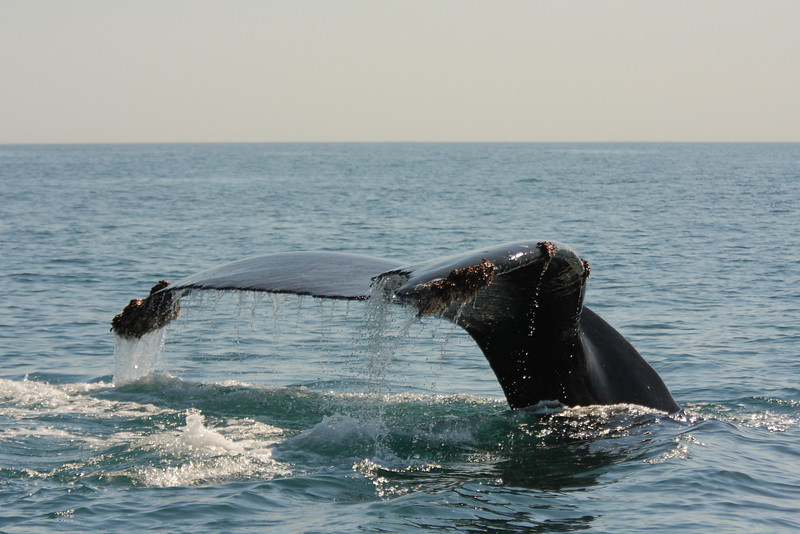 Mexico_Cabo_Whales 04.JPG