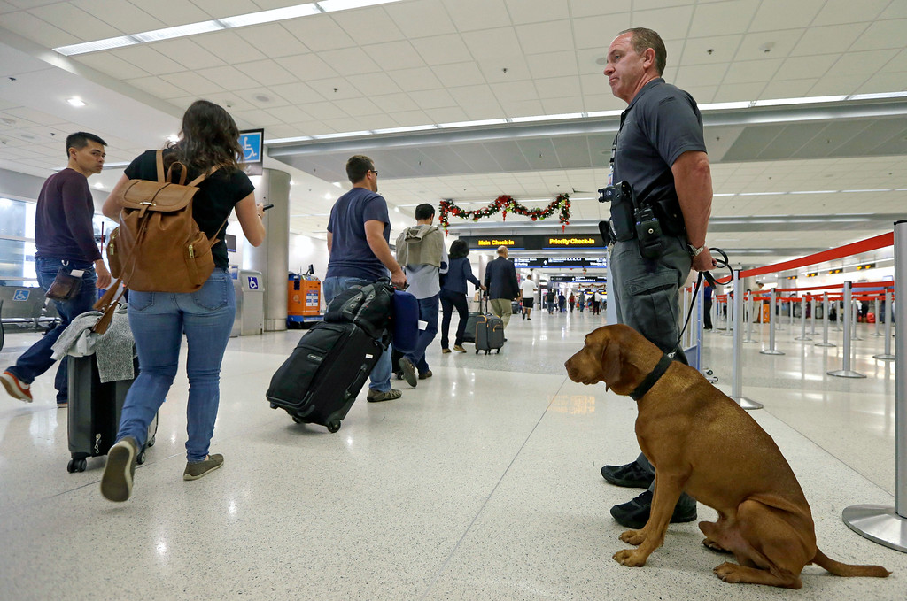 . Miami-Dade police officer William Cook and police dog Ringo guard the terminal at Miami International Airport, Wednesday, Nov. 23, 2016, in Miami. Almost 49 million people are expected to travel 50 miles or more for the Thanksgiving holiday, the most since 2007, according to AAA. (AP Photo/Alan Diaz)