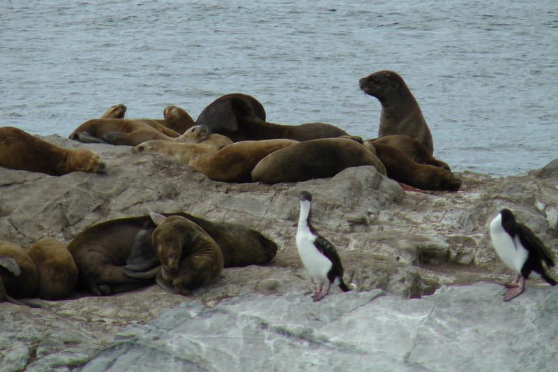 Seal Island, Catamaran Tour, Beagle Channel, Ushuaia, Argentina