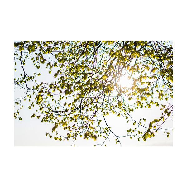 122_tree_10x10.jpg