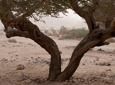 from Machtesh Ramon to the Arava - Feb 22-23