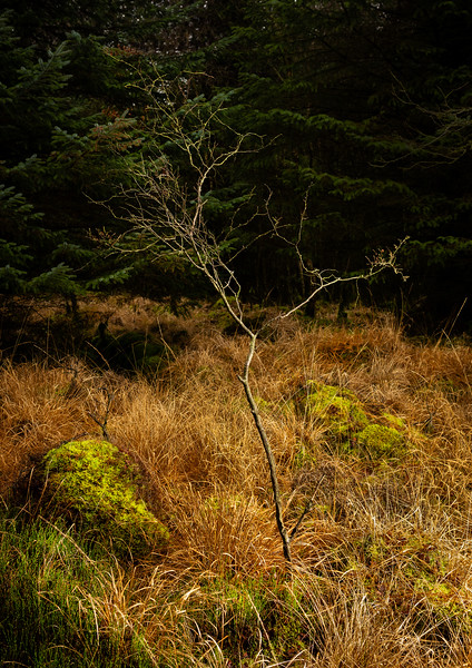 Woodland with Light