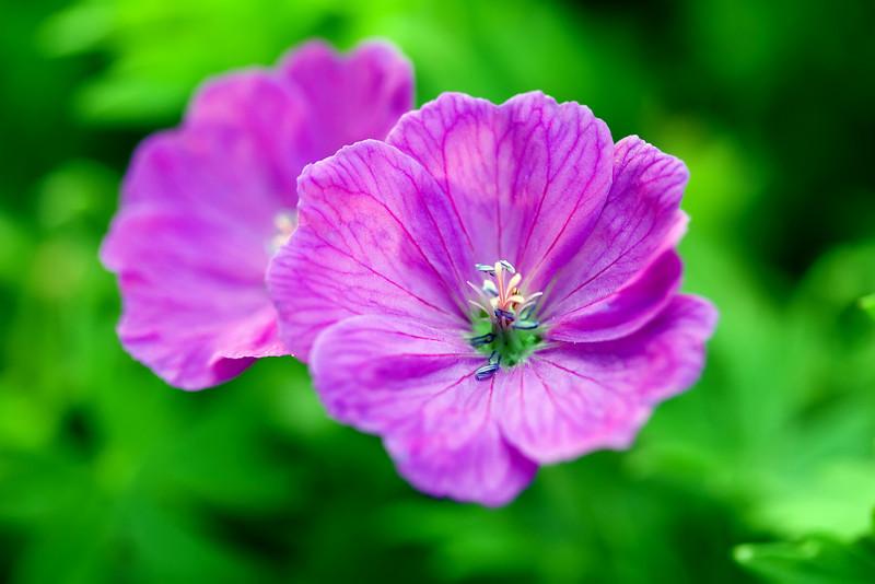 Flower v.2.jpg
