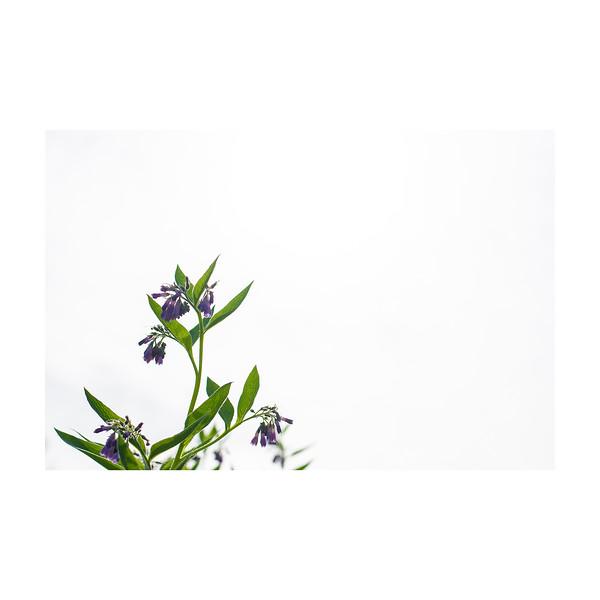 148_Plant_10x10.jpg
