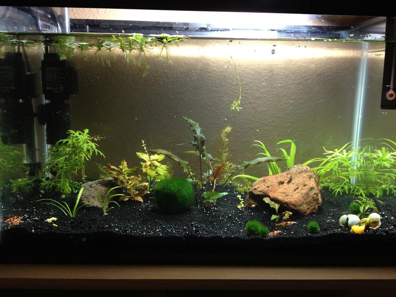 Shrimp tank (8797432294).jpg