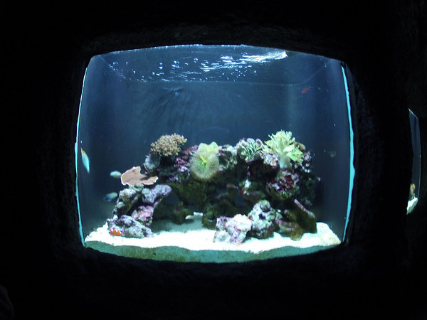 Seattle Aquarium July 2012