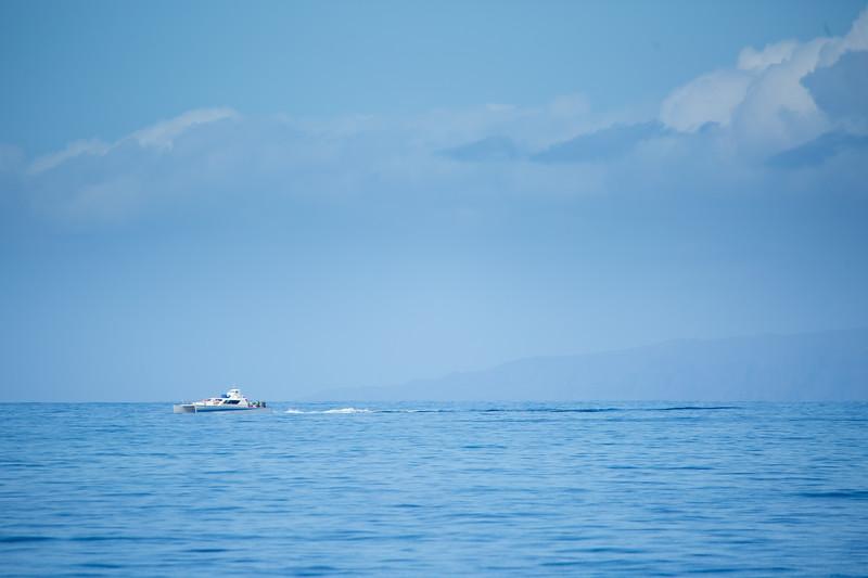 whales-leila-4.jpg