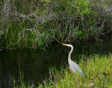 Everglades Národný park, Florida