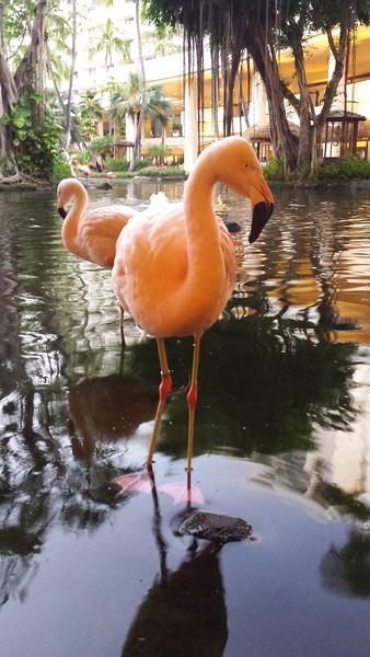 Flamingos in the hotel lobby