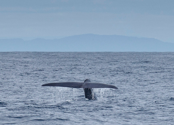 Whale off Westport, New Zealand on 5 September 2011