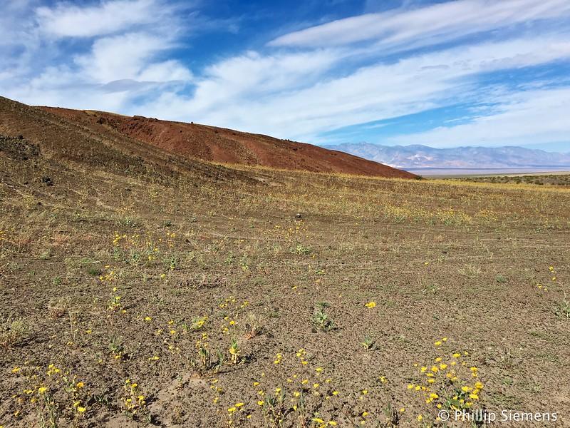 Flowers in Split Crater