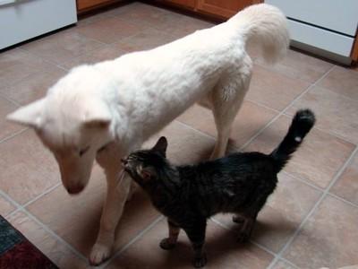 huskyandcat1.jpg