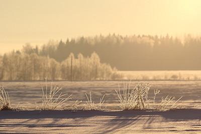 Talv - Winter