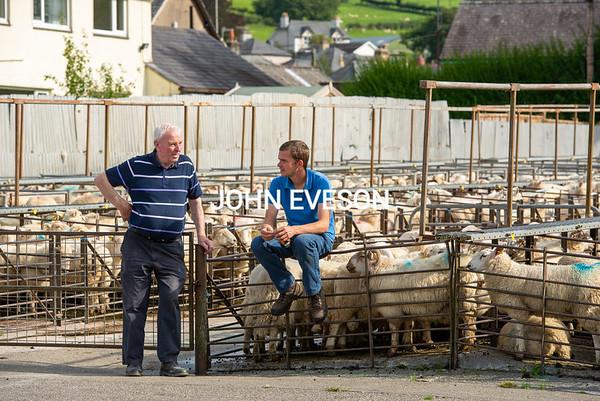 MTH Llanwrst Mart September 21 prime lambs