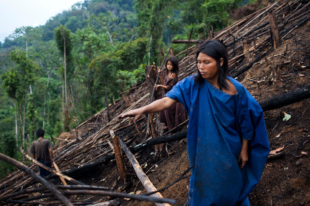 . In this Oct. 1, 2013 photo, Ashaninka Indian Antonia Amadeo and her daughter Lourdes felled trees to make room for planting yuca, near Kitamaronkani, Pichari district, Peru. Kitamaronkani, one of 350 Ashaninka communities, lies in the Apurimac river valley, the No. 1 coca-producing valley in the world. Despite the wealth-producing crop around them, residents live a largely pre-industrial existence. According to 2011 Health Ministry figures, nearly half the children suffer from malnutrition. (AP Photo/Rodrigo Abd)