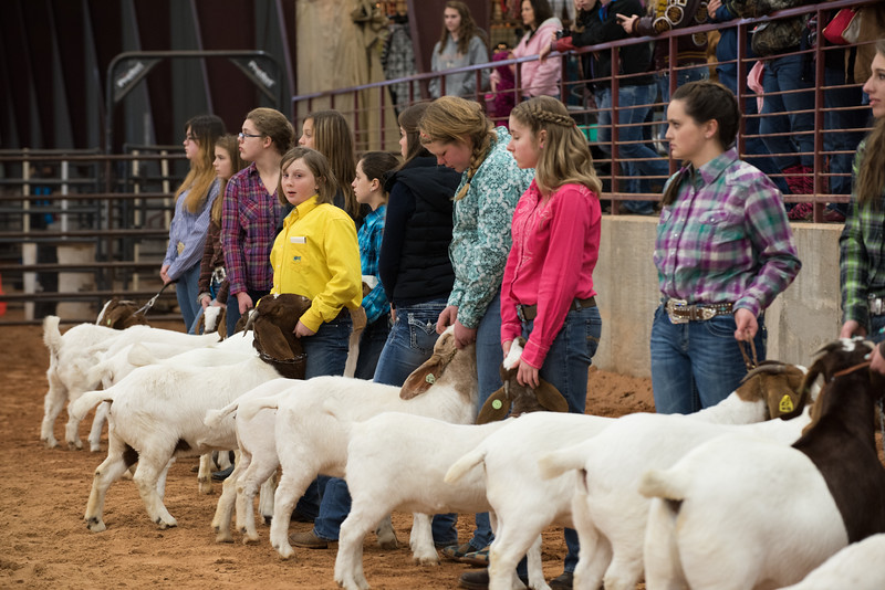 Hays_County_Show-0052.jpg