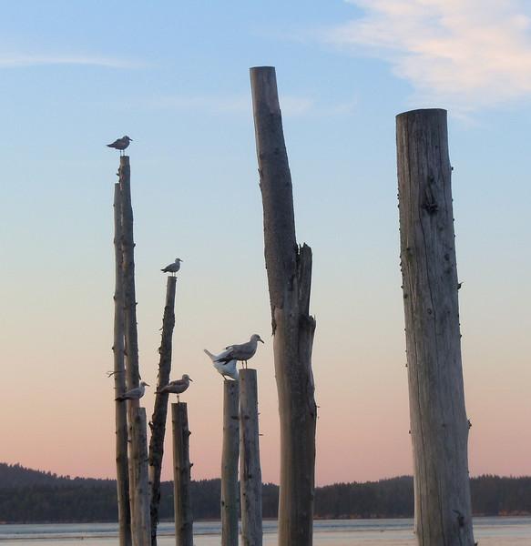 Travels to Maine, Prince Edward Island, and Nova Scotia