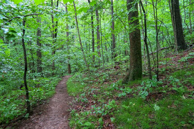 Buck Spring Trail -- 3,690'