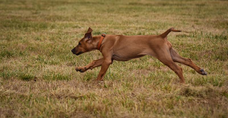 puppy-69.jpg