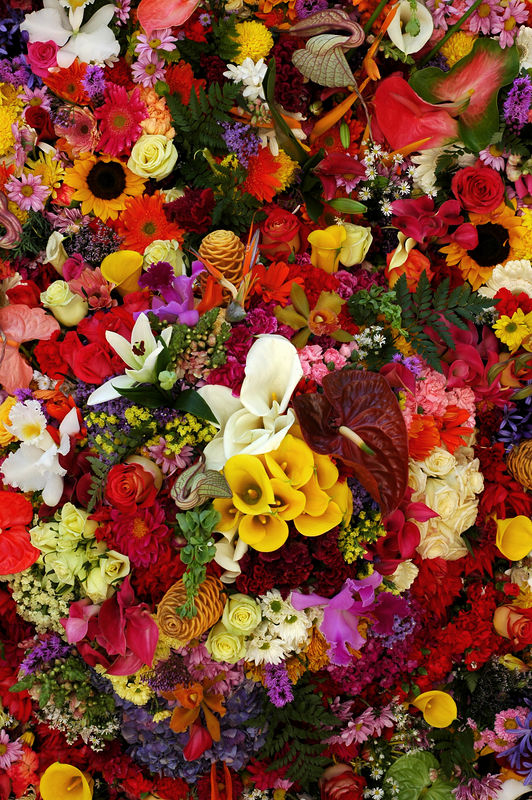 Flores.jpg