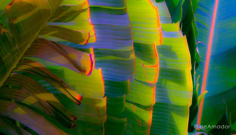 Musa Tropical 0339-aeamador.jpg