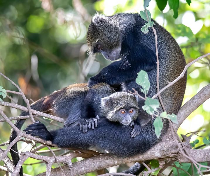 Monkey Business 2019