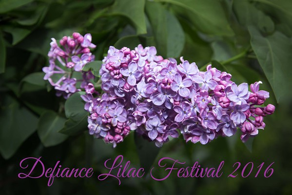 Defiance Lilac Festival 2016