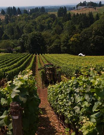 Willamette Valley - Oregon Wine Country