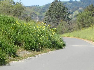 Pleasant Hill Walk with Sharon, 3/23/10