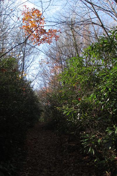 Mac's Gap Trail - 3,840'