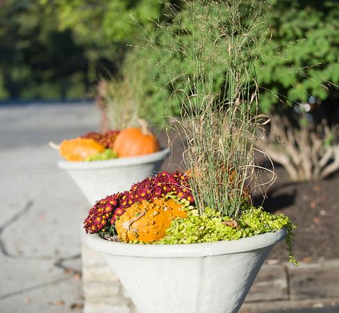 Fall Display Sept 29, 2012
