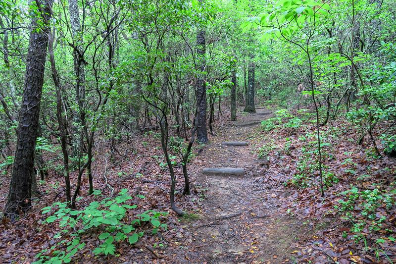 Mountains-to-Sea Trail -- 3,080'