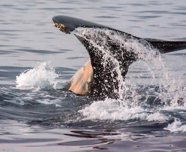 Maui Whales-41.jpg