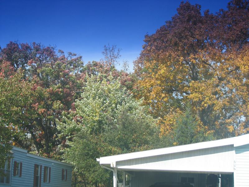 Fall pics 2008 004.jpg