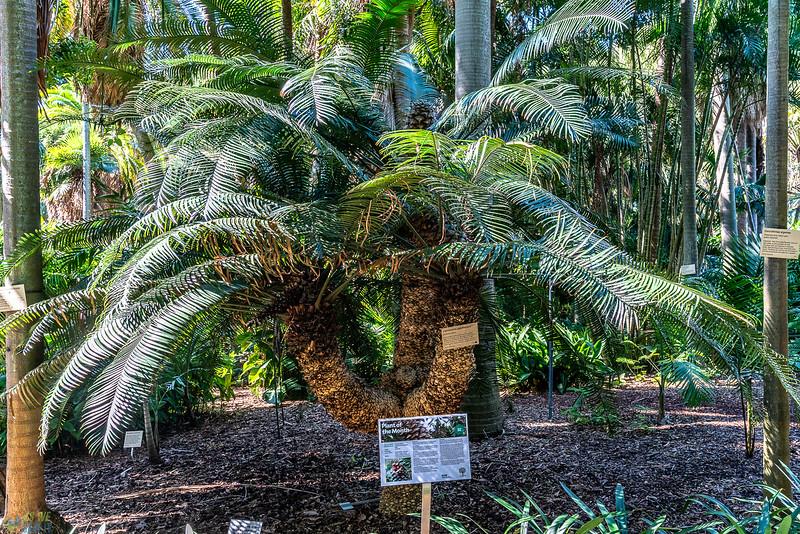 Royal-Botanic-Garden-1018.jpg