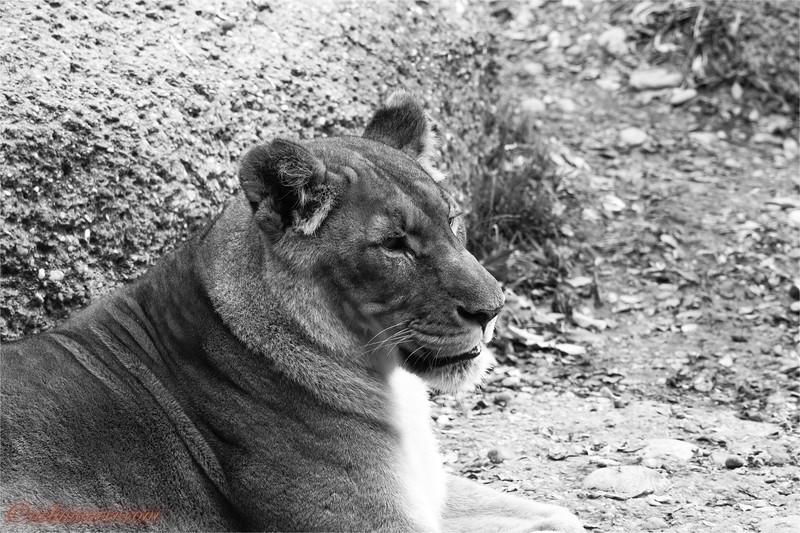 2017-11-16 Zoo Basel - 0U5A8775.jpg