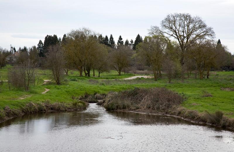 laguna creek.jpg
