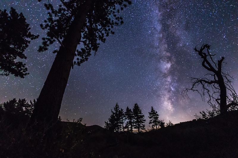 Milky Way Drifting Across the Trees